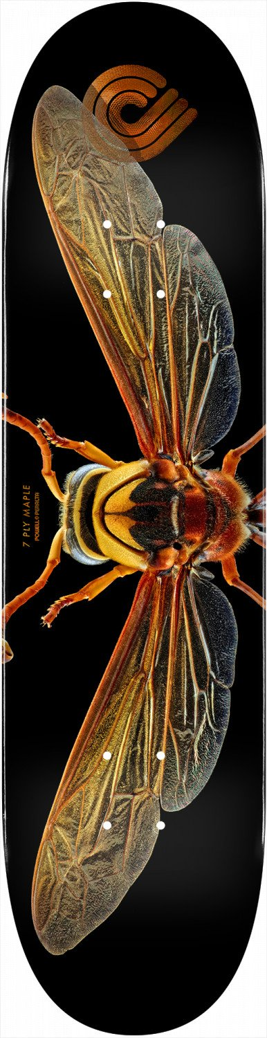 Powell - Potter Wasp