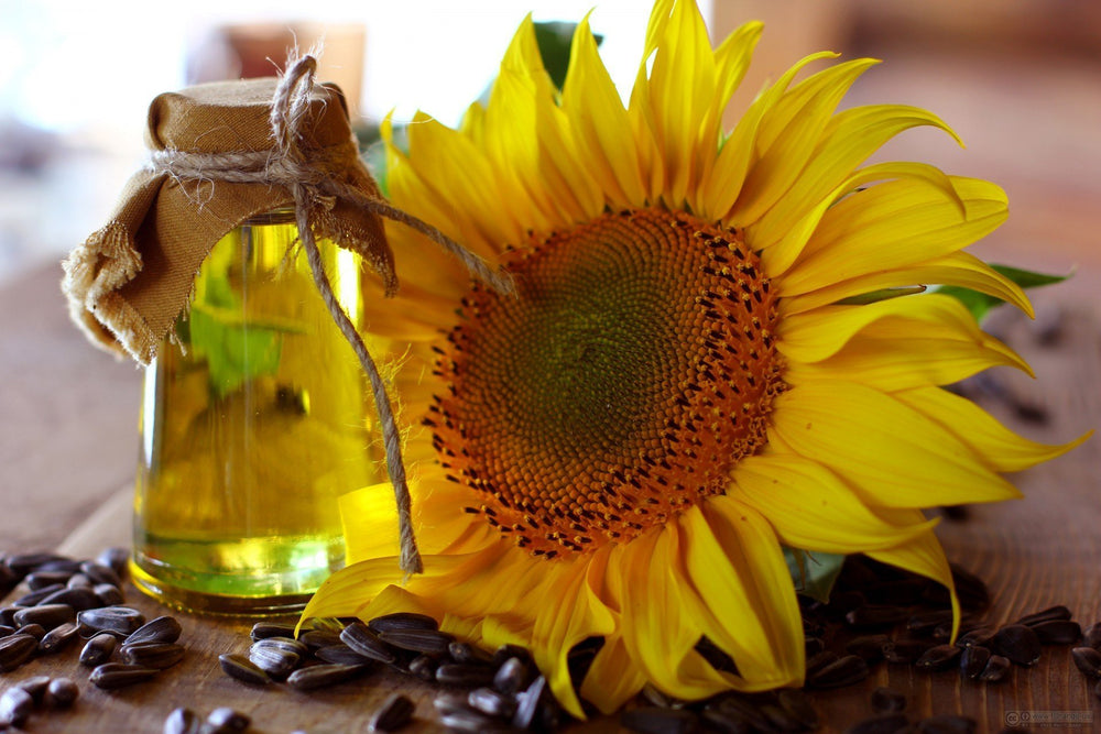The 7 Amazing Benefits of Sunflower Oil | Sweet Nectar Beauty