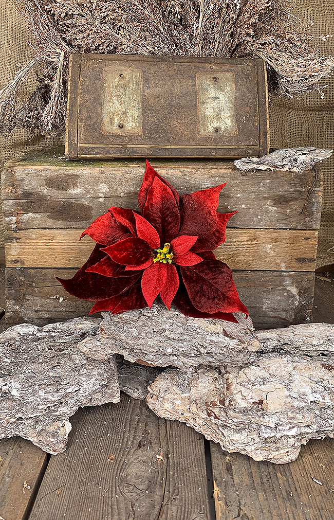 Burgundy Poinsettia on Clip