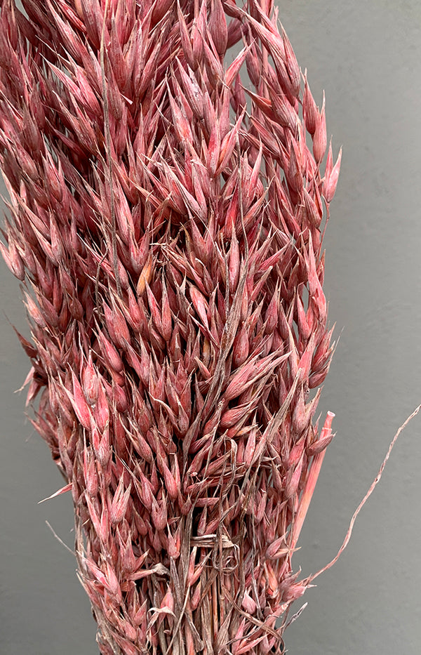 Avena Bunch - Frosted Pink