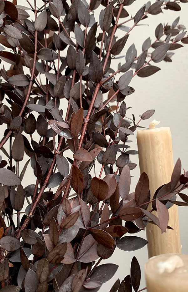 Parvifolia Eucalyptus Bunch - Red