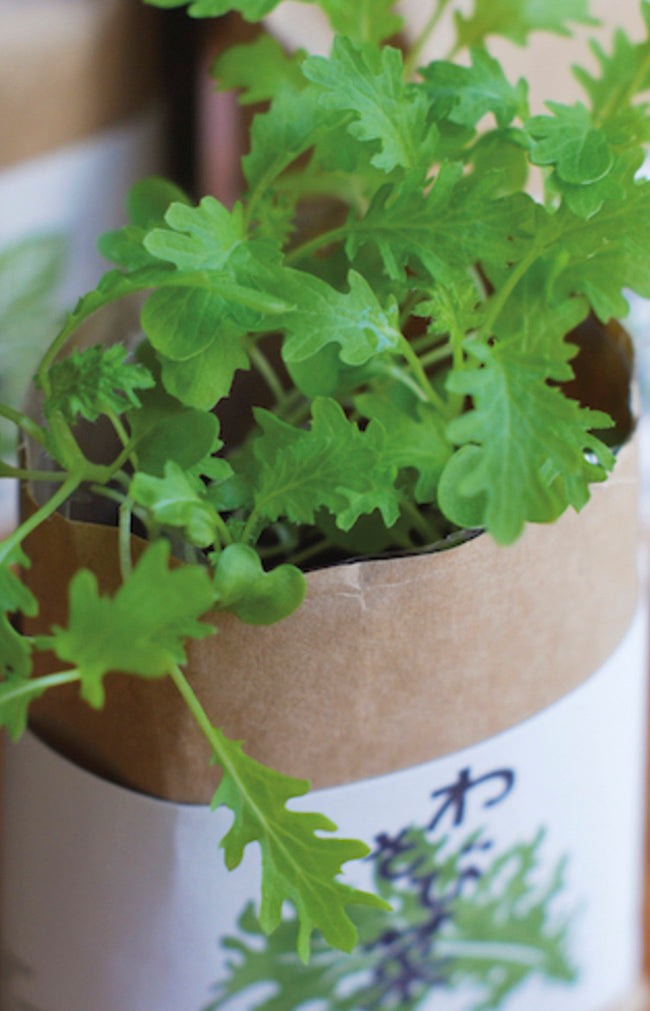 Cultivate & Eat - Shiso
