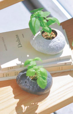 Plants Rock - Basil