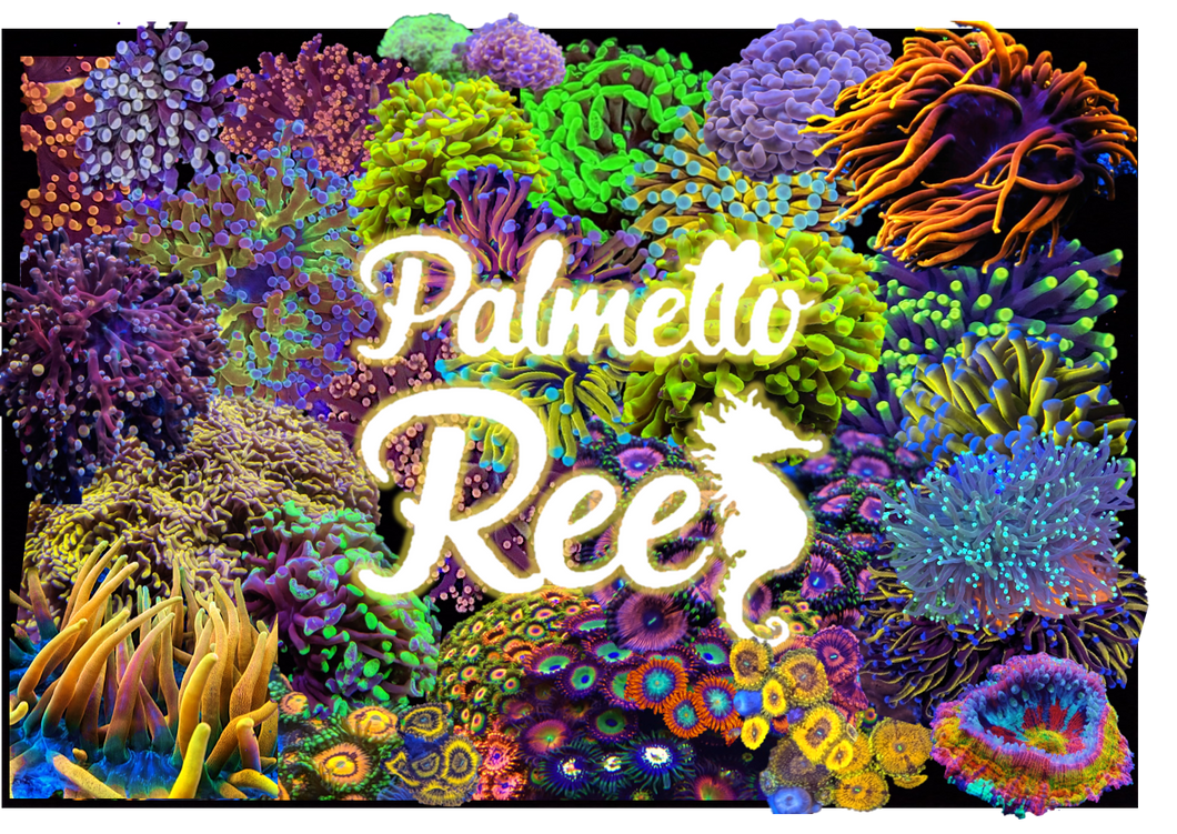 Palmetto Reef Gift Card