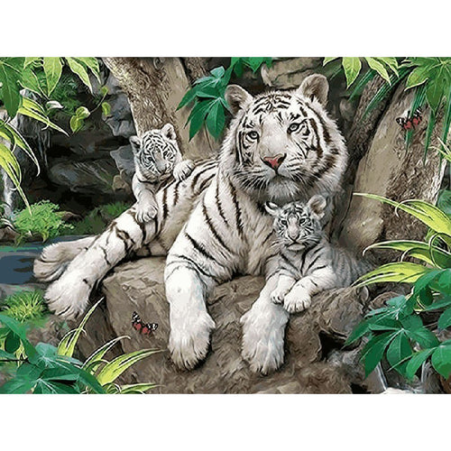 Family Of White Tigers - DIY Painting By Numbers Kit