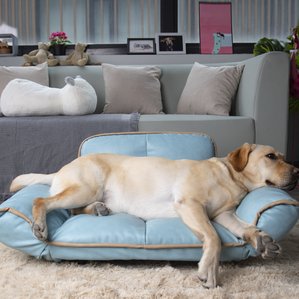 Creating a Stylish Home with Two Dogs | Goldie's the Gold Standard