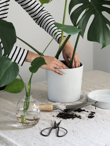 5 Ways to Care for Your Plant: Spring Edition