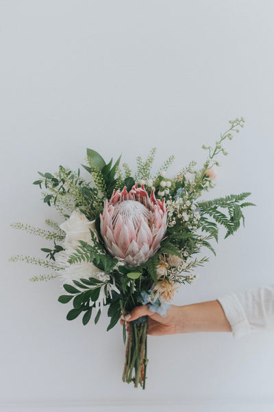 Featured Flower - King Protea