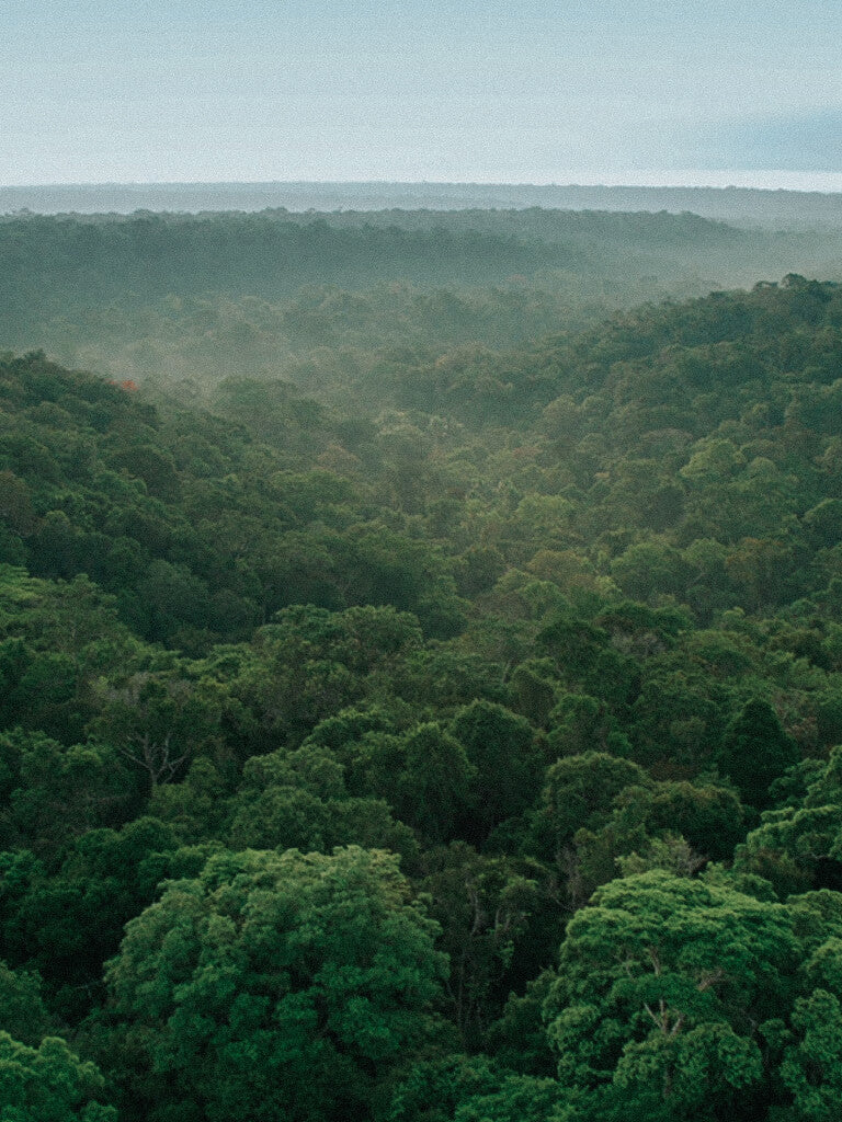 The Amazon Rainforest - How the Earth Got It's Lungs