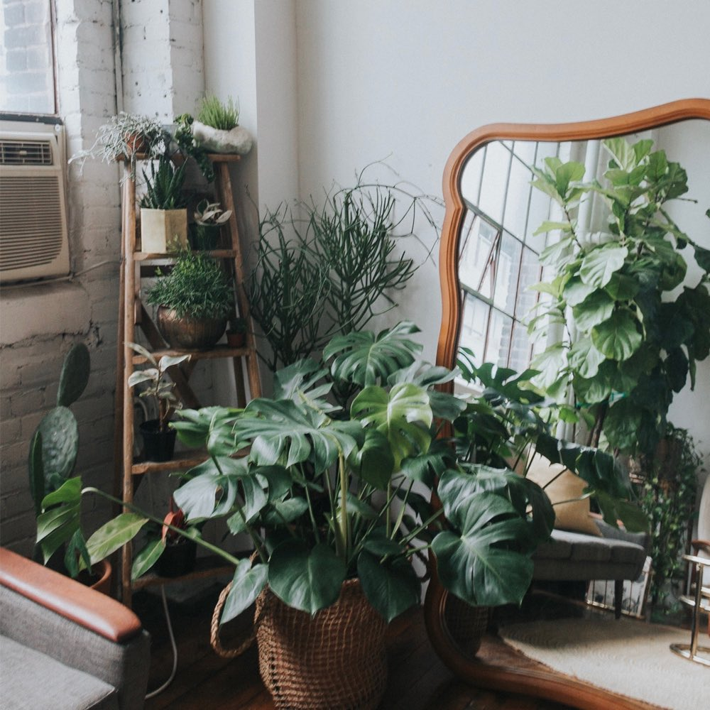 5 Ways to Care for Your Plant - Fall Edition
