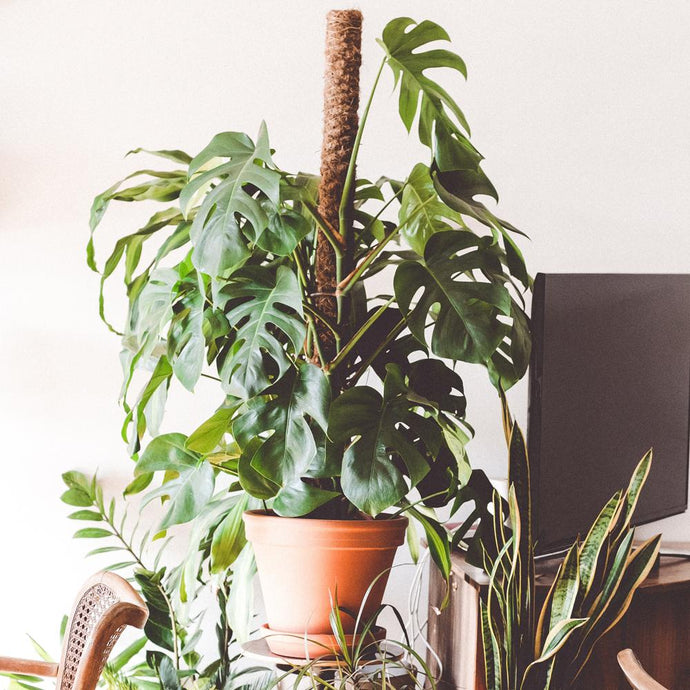 5 Ways to Care for Your Plant: Winter Edition