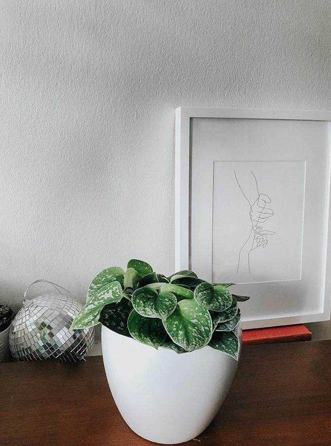 Monthly Plant + Cacti Subscription