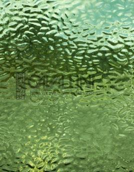 Wissmach Glass EM 287 27x32 EM 287 English Muffle/Sage Green also 4907 sheet 71070914