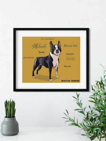 Boston terrier traits print