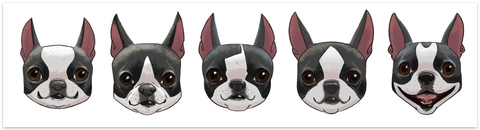 Boston terrier vinyl bumper sticker