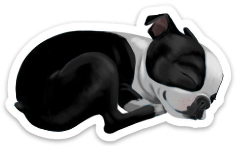Boston terrier vinyl magnet, Sleepy boston terrier