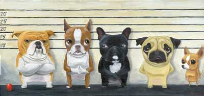 Boston terrier gift, Brown Red Boston Terrier - The Line Up Print