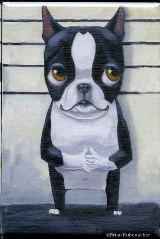 The Line Up - Boston Terrier Dog aArt Magnet
