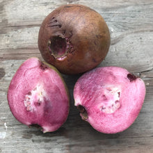 Load image into Gallery viewer, Guava, Purple Malaysian