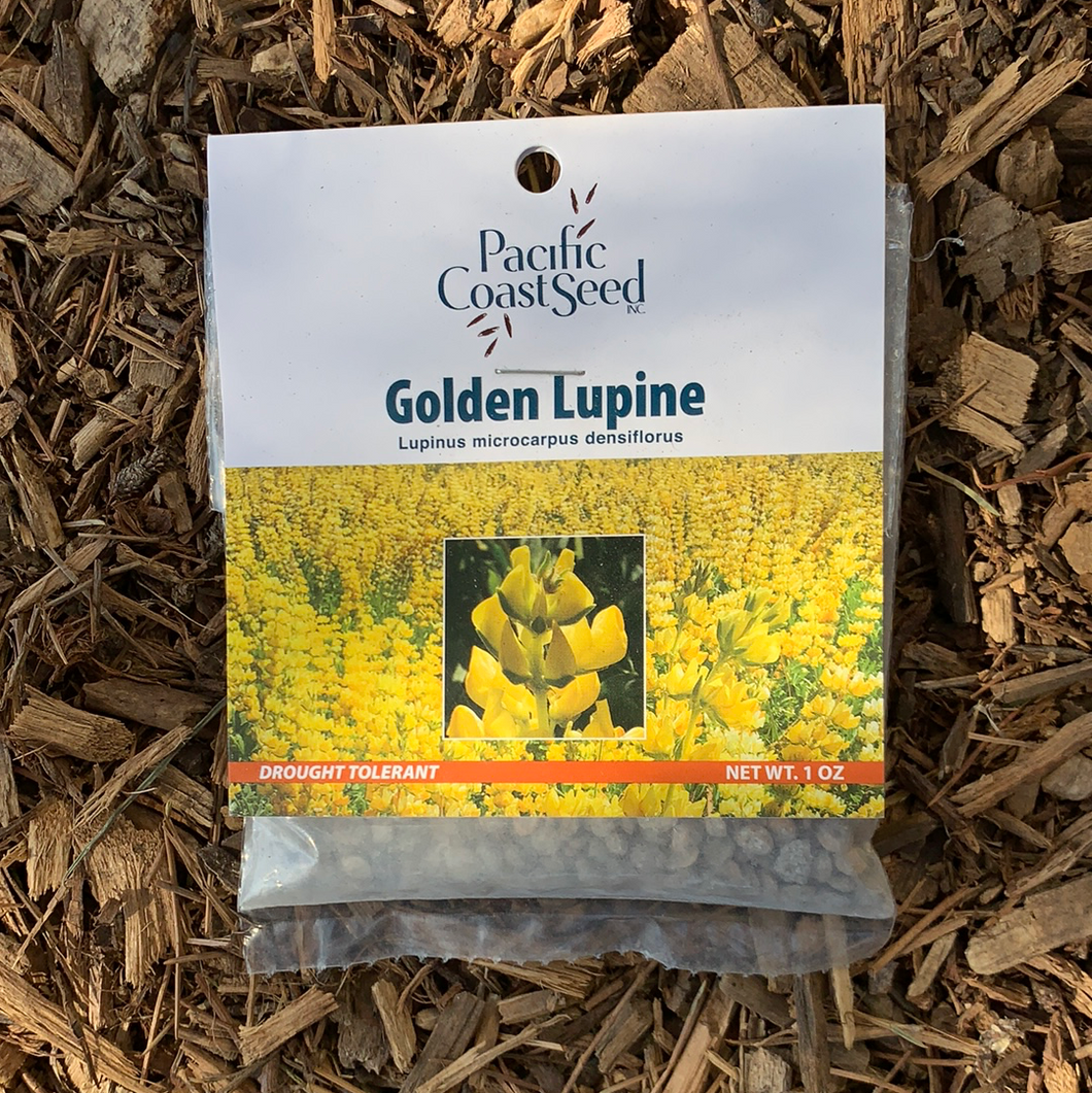 Pacific Coast Seed, Golden Lupine