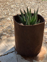 Load image into Gallery viewer, Gaster Aloe Royal Highness Cactus Cacti