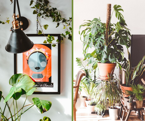 1970 decor trends_indoorplants