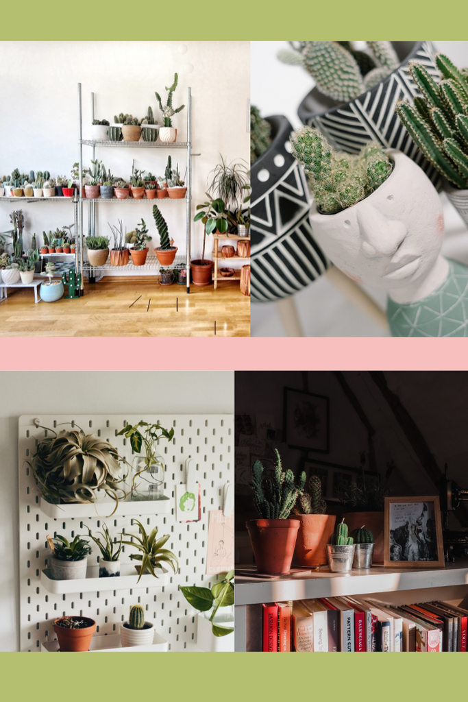 A selection of succulents and cactus plants