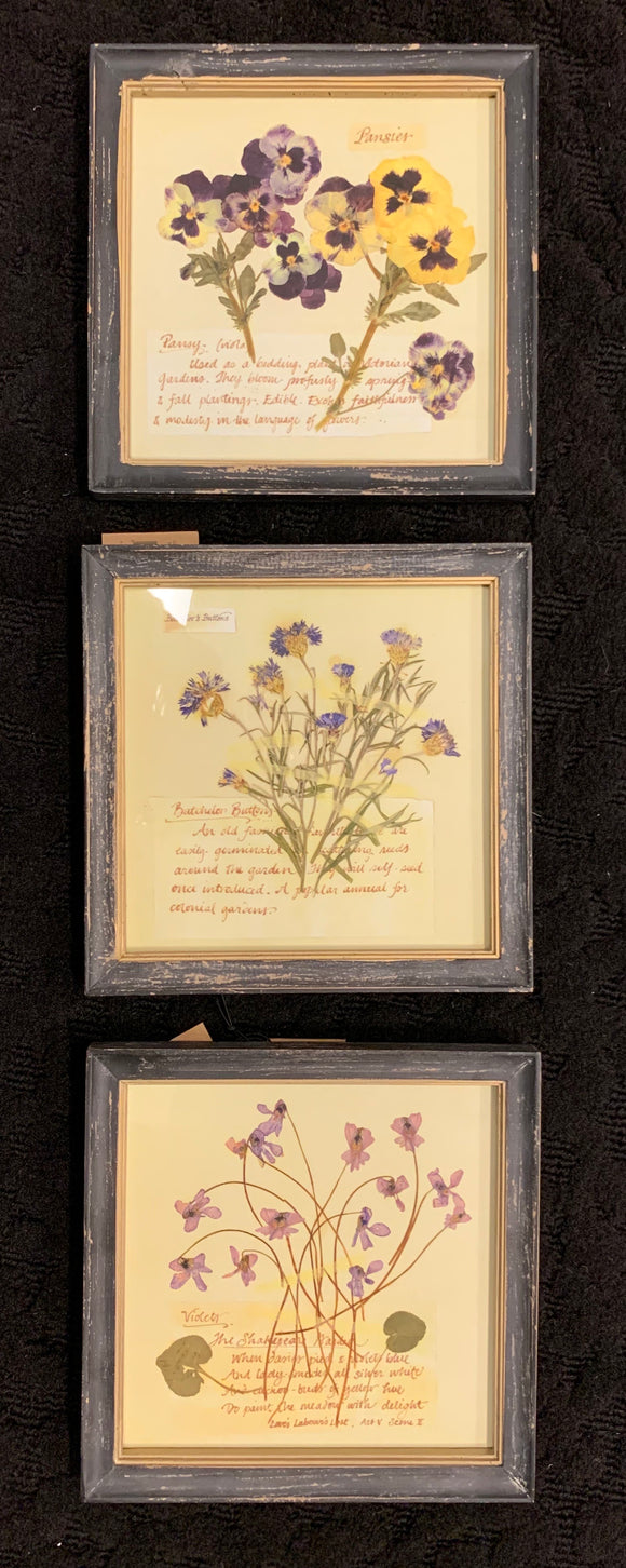 Art - Set of 3 Framed Pressed Flowers 10x10 each