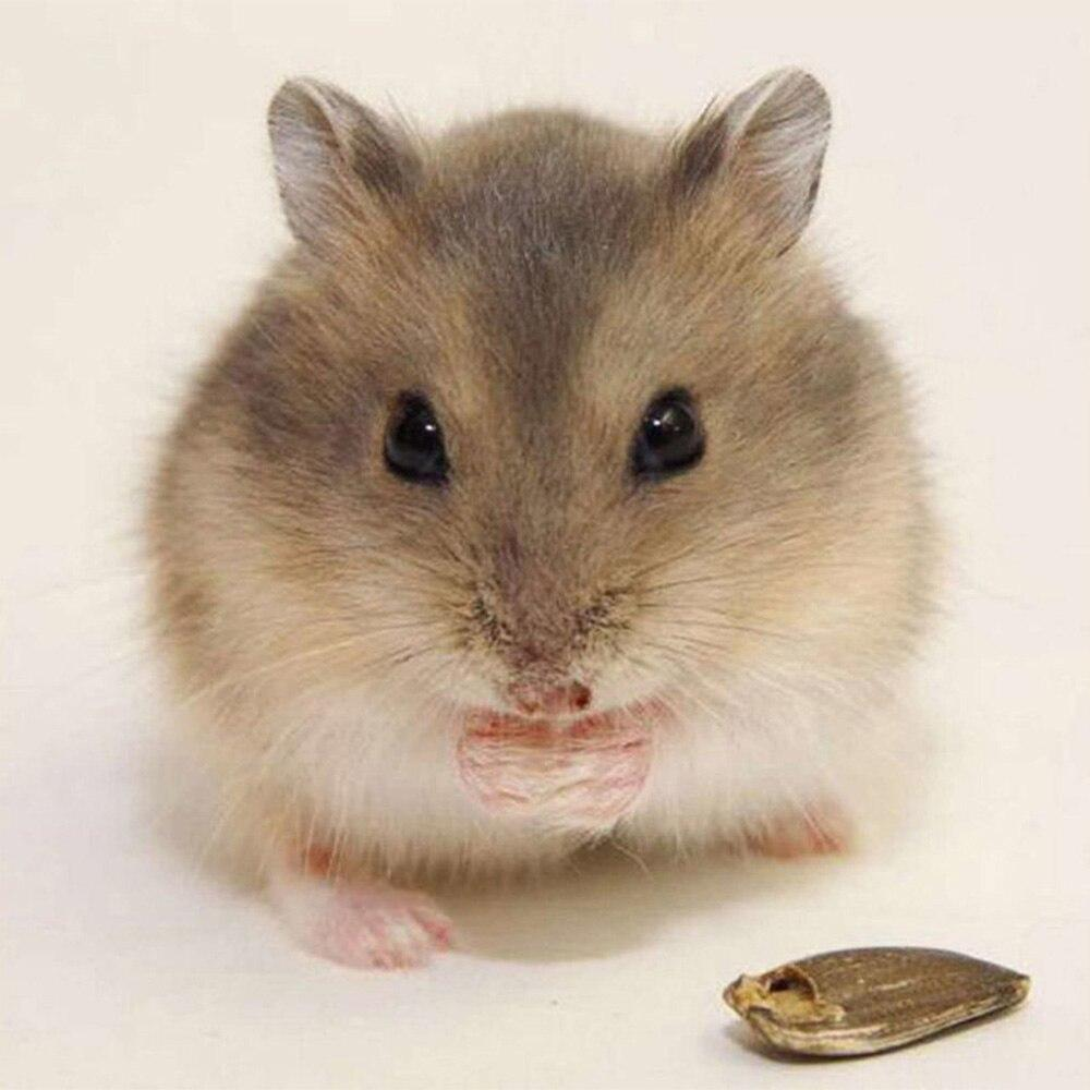 Diamond Painting Hamster - Hobby-4U