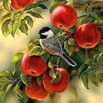 Diamond Painting Vogel & Appelboom - Hobby-4U
