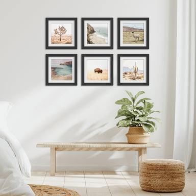 Neutral Nature Photography - 6 Piece Framed Gallery Wall Set - Americanflat