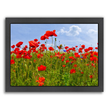 Field Of Poppies  Panoramic View By Melanie Viola Black Framed Print - Wall Art - Americanflat