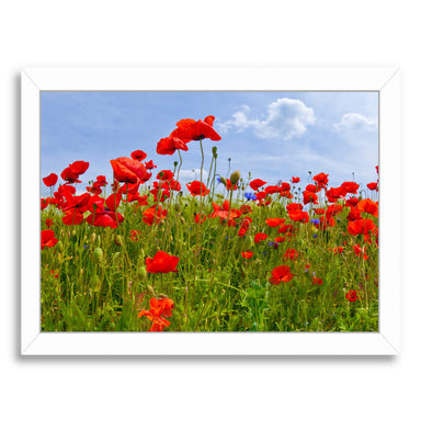 Field Of Poppies  Panoramic View By Melanie Viola White Framed Print - Wall Art - Americanflat