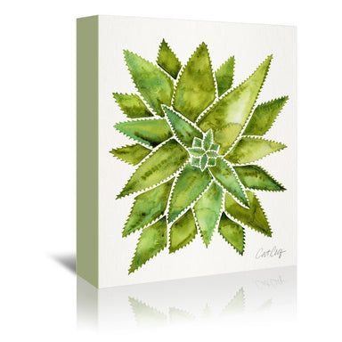 Aloe Vera by Cat Coquillette Wrapped Canvas - Wrapped Canvas - Americanflat