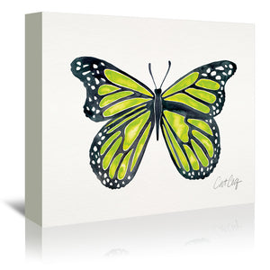 Lime Butterfly by Cat Coquillette Wrapped Canvas