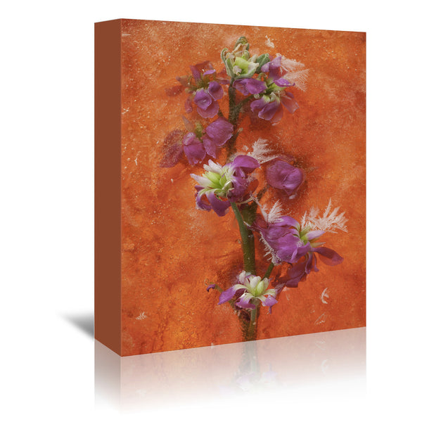 Delicate Creations by Zina Zinchik Wrapped Canvas