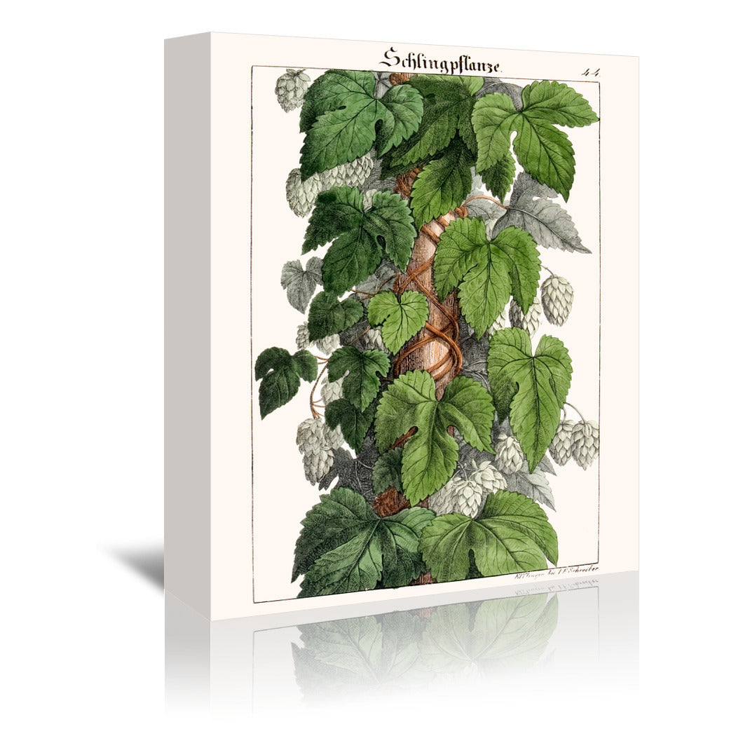 Schlingpflanze by New York Botanical Garden Wrapped Canvas - Wrapped Canvas - Americanflat