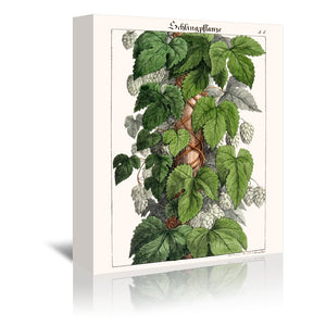 Schlingpflanze by New York Botanical Garden Wrapped Canvas