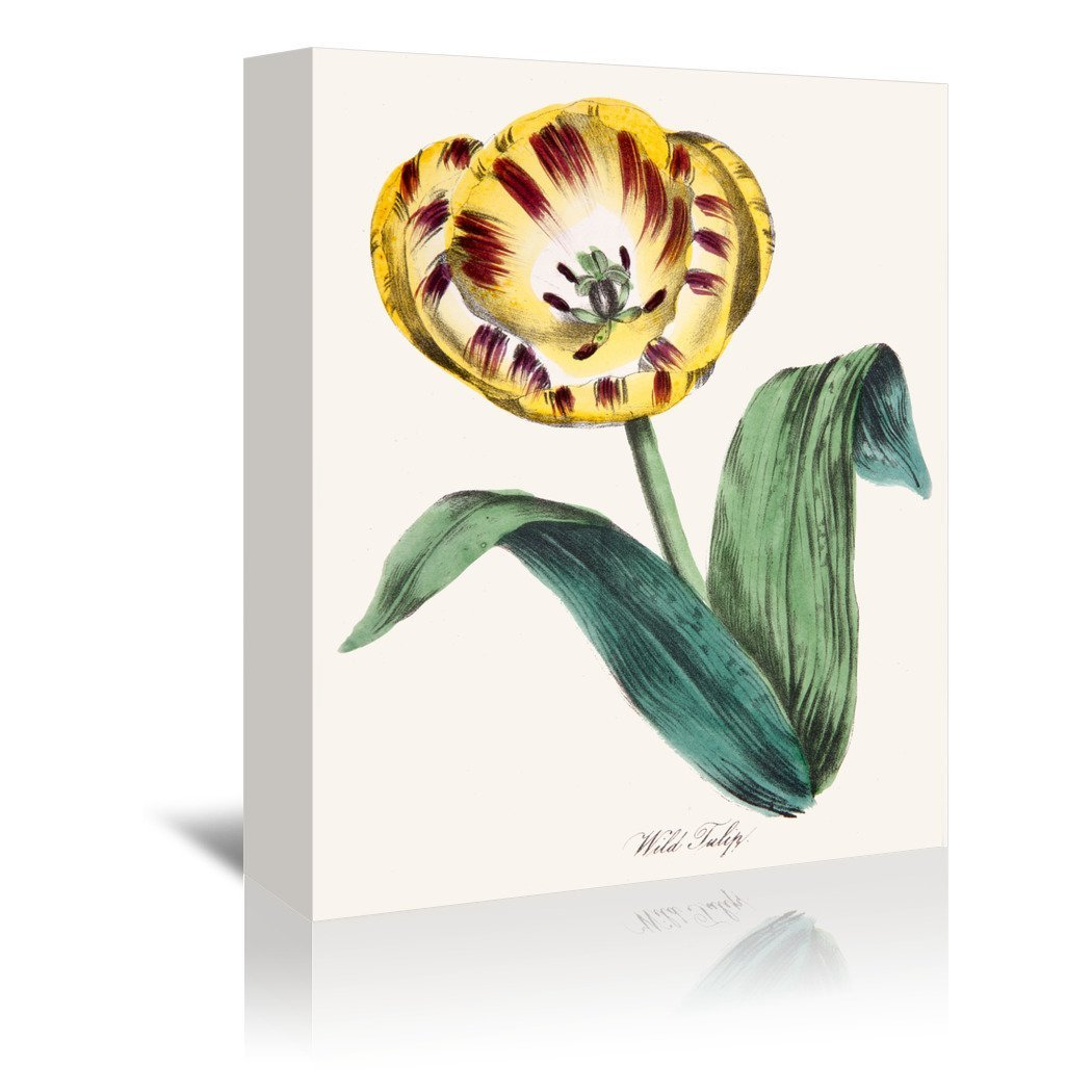 American Flora Wildtulip by New York Botanical Garden Wrapped Canvas - Wrapped Canvas - Americanflat