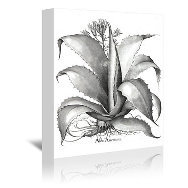 Besler 10 by New York Botanical Garden Wrapped Canvas - Wrapped Canvas - Americanflat
