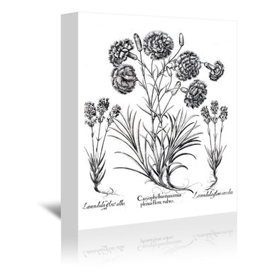Besler 11 by New York Botanical Garden Wrapped Canvas - Wrapped Canvas - Americanflat