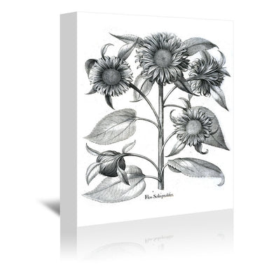 Besler 4 by New York Botanical Garden Wrapped Canvas - Wrapped Canvas - Americanflat