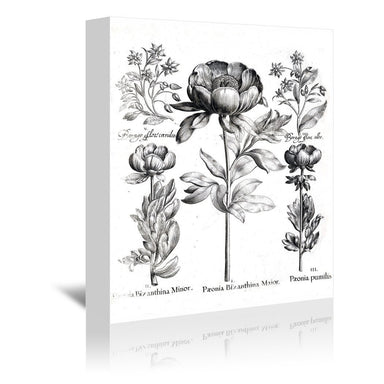 Besler 6 by New York Botanical Garden Wrapped Canvas - Wrapped Canvas - Americanflat