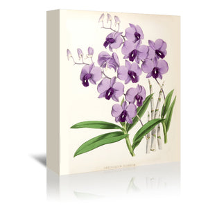 Fitch Orchid Dendrobium Bigibbum by New York Botanical Garden Wrapped Canvas