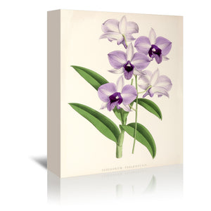 Fitch Orchid Dendrobium Phlaenopsis by New York Botanical Garden Wrapped Canvas