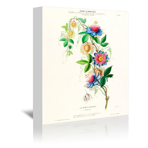 Flored Amerique Lamarie Gougeat by New York Botanical Garden Wrapped Canvas