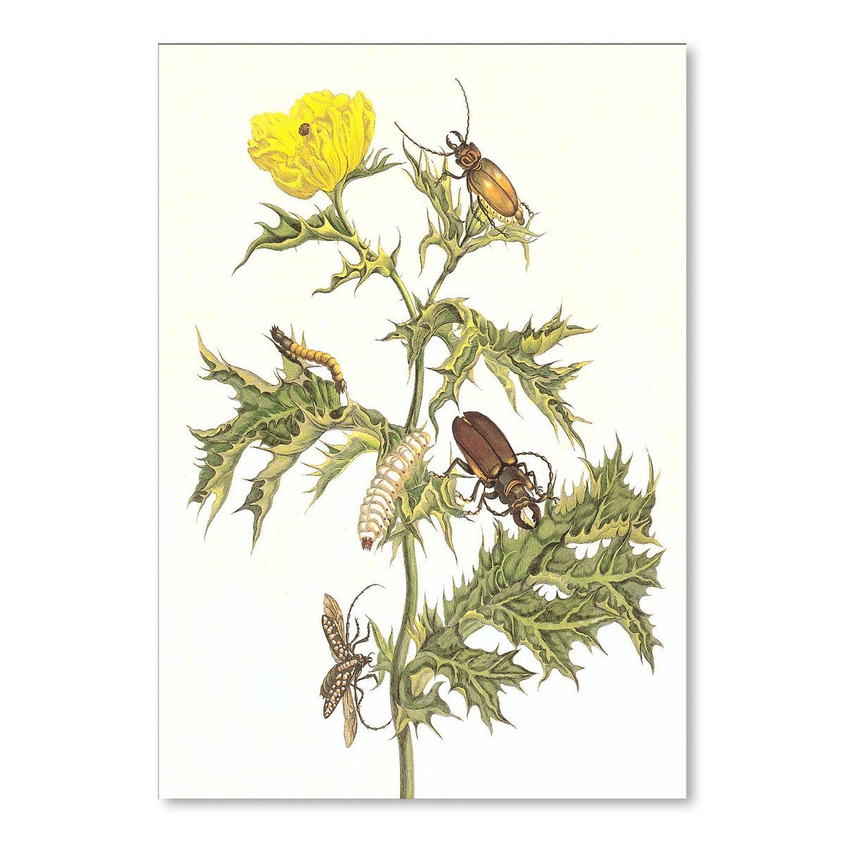 Beetles And Grubs On Thistle by Found Image Press Art Print - Art Print - Americanflat