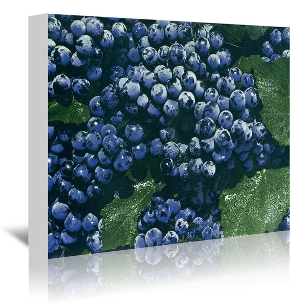 Blueberries by Found Image Press Wrapped Canvas