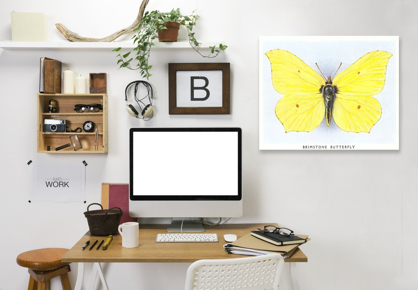 Brimstone Butterfly by Found Image Press Wrapped Canvas - Wrapped Canvas - Americanflat