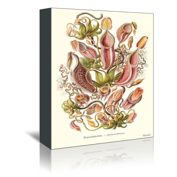 Carnivorous Plants by Found Image Press Wrapped Canvas